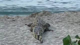faze tari turistii si crocodilul