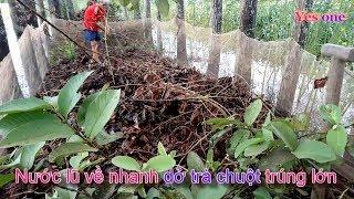 Nước Lên Nhanh Dở Chà Chuột Trúng Lớn How To Catch The Mouse And Strange Old Farmer Yes One