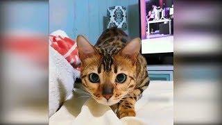 Приколы с животными 2019 февраль#21 Смешные видео про котов и собак, лучшие приколы с котами до слёз