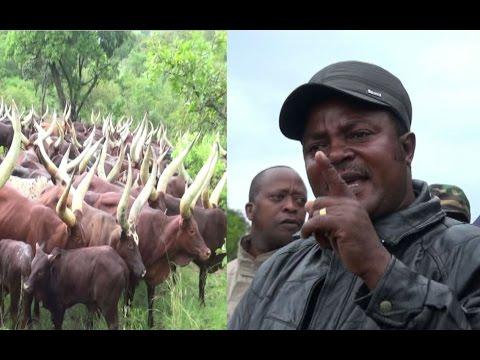 'Usipotoa mifugo yako kwa hiari itataifishwa' -DC Karagwe