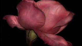 Ennio Morricone Dulce Pontes YOUR LOVE Music