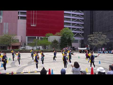 小柳保育園ばら組 @AOMORI春フェスティバル(青森駅前公園) 2018-05-05T10:00