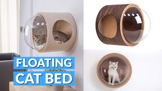 Floating Bubble Window Cat Bed