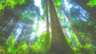 Peaceful Relaxing Music ➤ Sleep Easy & Calm ➤ Soothing Music for Meditation, Healing Therapy.