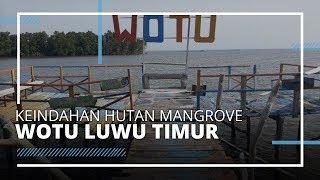 Menjelajah Hutan Mangrove di Luwu Timur, Memiliki Suasana yang Asri dan Tenang