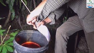42 | Cắm Câu Sông Bằng Mồi Dế Quá Nhạy | Fishing