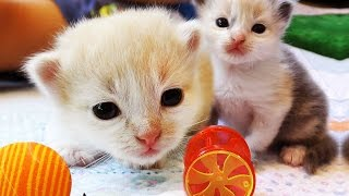 КОШКИ В НОВОМ ДОМИКЕ Видео Для Детей ПРО КОШКИ Play with Cat Funny Cats Video