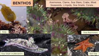 Marine Biology - Types of Organisms