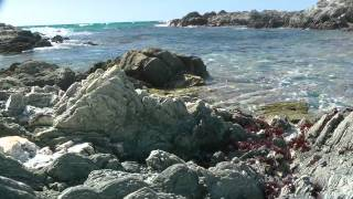 Chatham Islands December 2011