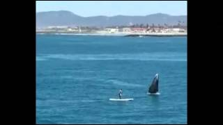 'Holy Cow!' Paddleboarder Nearly Hit by Whale