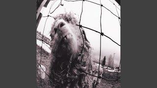 Pearl Jam Dissident Music