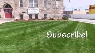 Can My Lawn Be Saved Or Should I Start Over?