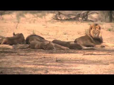 African safari tours highlights
