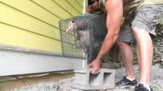 Yard Possum