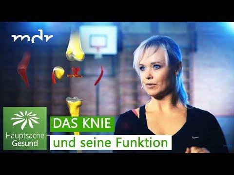 Anatomie des Kniegelenks mit Muskeln