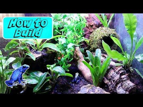 How to Build a Dart Frog Vivarium