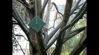 Rollerfeeder Rain Proof ~ Dry Seed ~ Squirrel Proof Bird Feeder