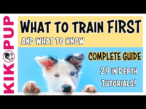 COMPLETE GUIDE to PUPPY TRAINING - What to train FIRST ...