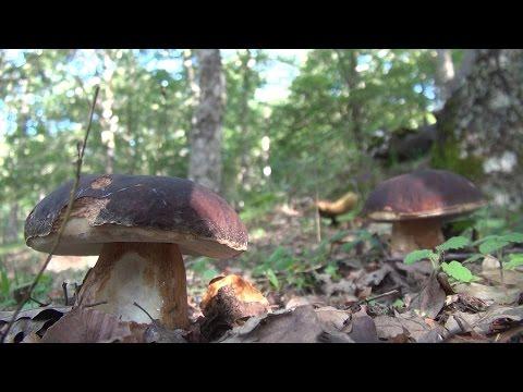 Che trattare un fungo di pelle di dita del piede