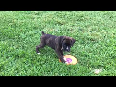 Cece playing fresbee
