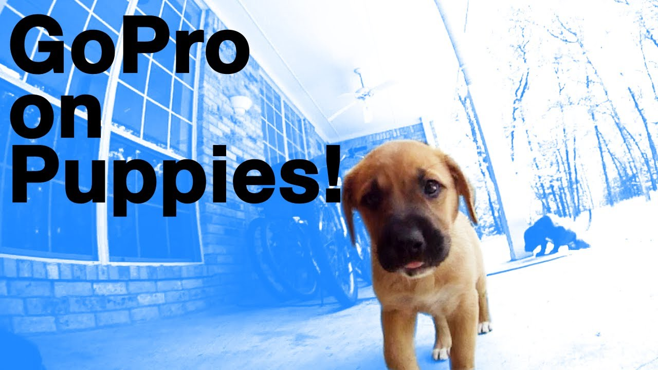 A Puppy Might Be The Best Spot To Mount Your GoPro