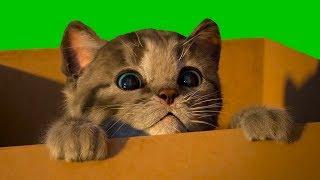 Маленький КОТЕНОК / СИМУЛЯТОР котика / Видео как мультик для детей #ПУРУМЧАТА