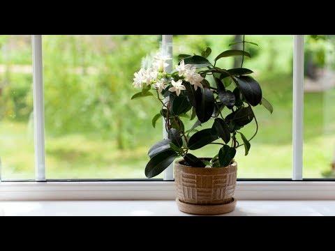Почему НЕ РАСТУТ комнатные растения | Что делать?