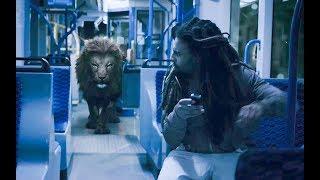 嗜血雄狮闯入荷兰红灯区,一夜之内暴走屠城