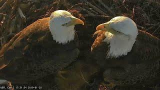 Live Bald Eagle Nest Cam, WE GOT AN EGG!! NEFL PTZ Cam 1