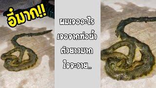 เอเลี่ยนในโลกจริง ปรสิตหรืออะไรกันแน่ มีเป็นหมื่นๆขา!!... #รวมคลิปฮาพากย์ไทย