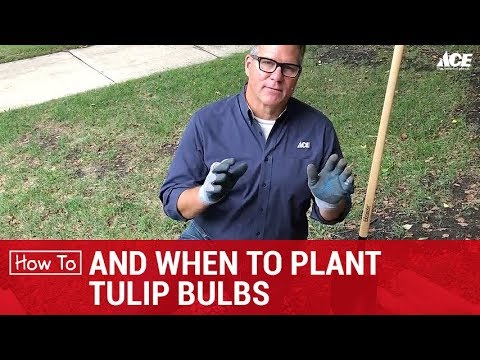 , title : 'How and When to Plant Tulip Bulbs - Ace Hardware