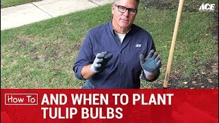 How and When to Plant Tulip Bulbs - Ace Hardware
