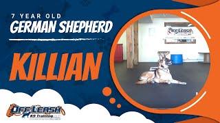 """7-Year Old Aggressive German Shepherd, """"Killian:"""" Best German Shepherd Trainers in Virginia"""