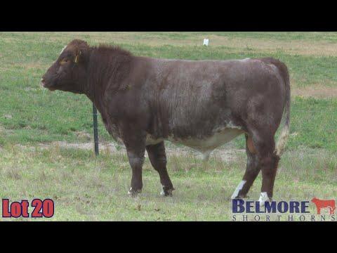 BELMORE DROVER Q290