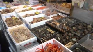 築地市場TsukijiFishMarket2016.2.9:00am