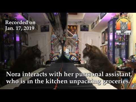 Nora The Piano Cat (Call & Response) 1.17.19