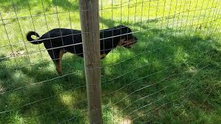 Cheap DIY Perimeter Fencing.