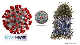 Коронавирус COVID-19: что дальше?