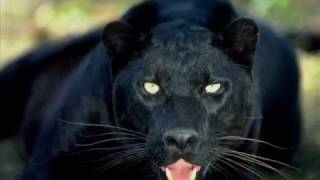 Can You See the Pride in the Panther By Tupac Shakur (Poetry Reading)