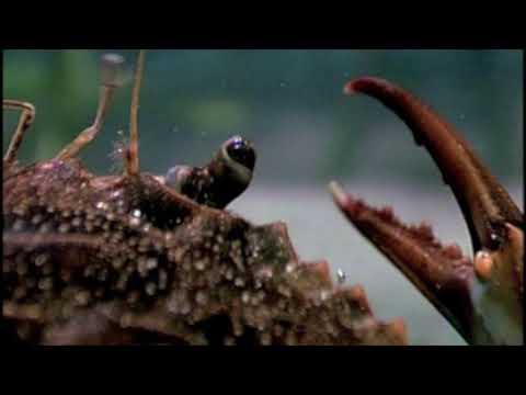 สิ่งที่เป็นความสัมพันธ์ของ papillomas และปรสิต
