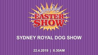2019 Advance Sydney Royal Dog Show - Best In Show