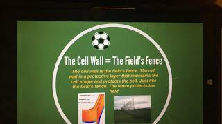 Cell Analogy/ Soccer theme