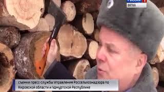В партии древесины для продажи Россельхознадзор обнаружил опасного для леса жука(ГТРК Вятка)
