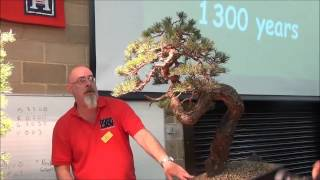 How to bend thick branches - Styling Two Scots Pines - Part 3