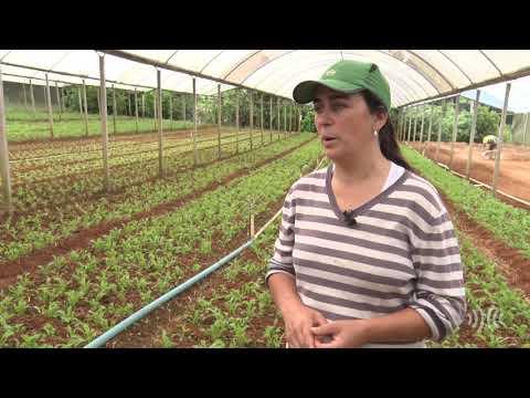 Município de Teresópolis é o maior produtor de hortaliças folhosas do estado do Rio de Janeiro