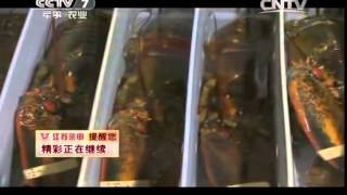 20150130 每日农经  冬季捕捞 加拿大龙虾揭秘