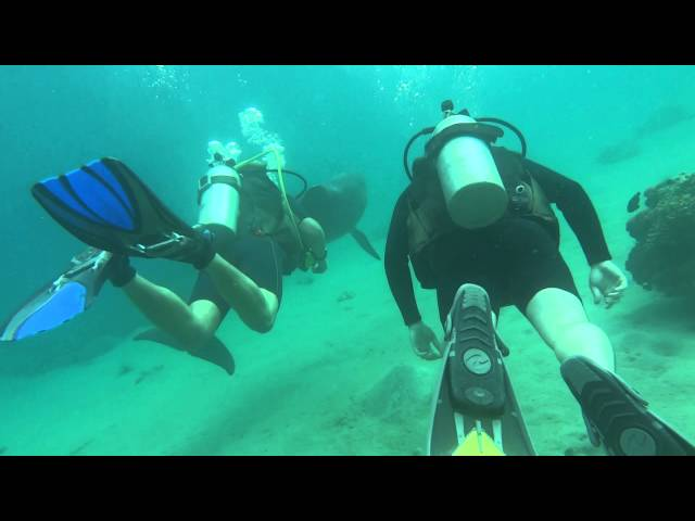 Diving with dolphins, Dolphin Reef, Eilat, Israel
