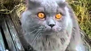Кот говорит гад.mp4