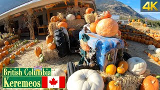 Pumpkins on display in Keremeos BC 🇨🇦 [October 2020]