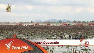ที่นี่ Thai PBS - นักข่าวพลเมือง : ขุดลอกบึงบอระเพ็ด